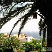 Palm Tree Nice France