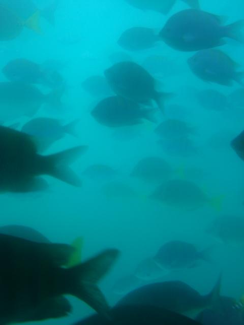 Underwater Fish Cabos San Lucas, Mexico